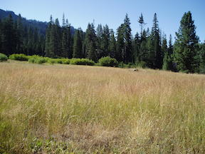 GCW Big Spring Meadow