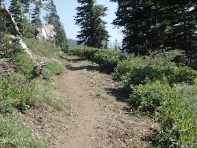PCT trail after